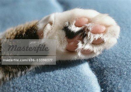 Tabby cat paw, closeup.