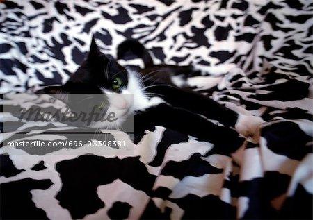 Chat noir et blanc sur noir et blanc couverture couché