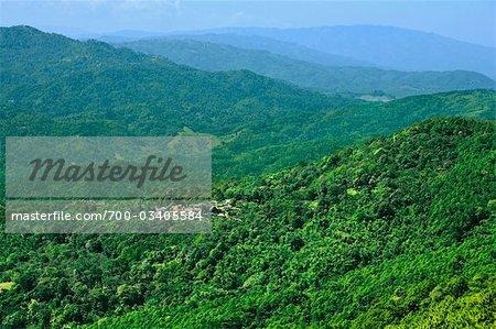 Akha, Village des tribus des montagnes, montagne de Doi Tung, Chiang Rai Province, nord de la Thaïlande, Thaïlande