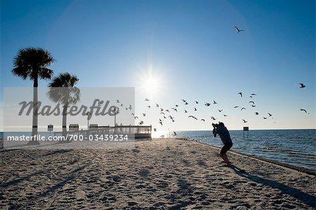 Photographe prendre des photos de mouettes, Hudson Beach, Florida, USA