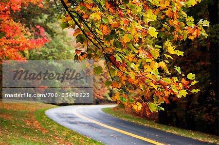 Country Road and Autumn Foliage, Blue Ridge Parkway, Virginia,  USA