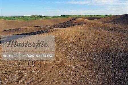 Palouse Fileds, région Palouse, labouré, comté de Whitman, Washington State, USA