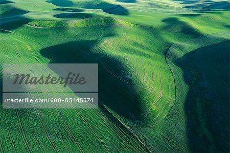 Felder, Palouse Region, Palouse, Whitman County, Bundesstaat Washington, USA
