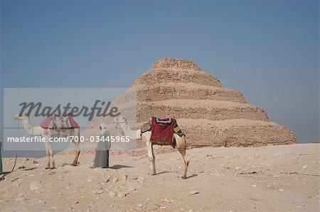 Homme avec des chameaux en face de la pyramide de Djéser Sakkara, Egypte