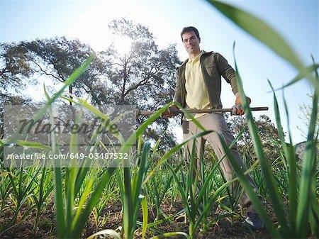 Man holding a ... in garlic field