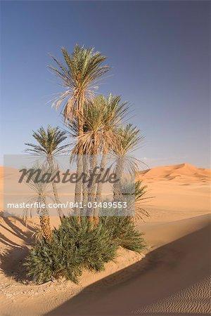 Erg Chebbi, Merzouga, désert du Sahara, Maroc, Afrique du Nord, Afrique