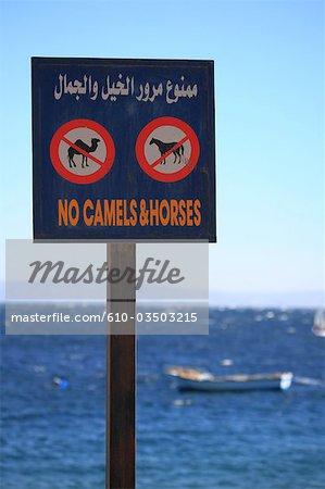 L'Egypte, la plage de Dahab, signe « pas de chameaux et de chevaux ».