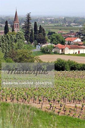 France, vignobles du Languedoc, Gaillac,