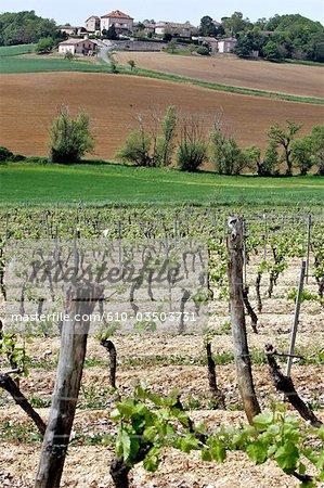 France, Languedoc, Gaillac, vineyards