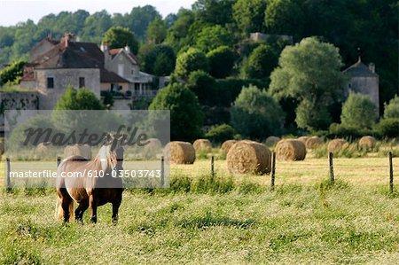 France, Burgundy, Noyer sur Serain, horse in a field