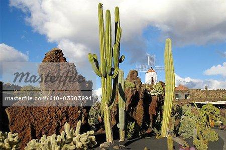 Espagne, Iles Canaries, Lanzarote, jardin de cactus