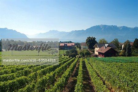 Suisse, vignobles