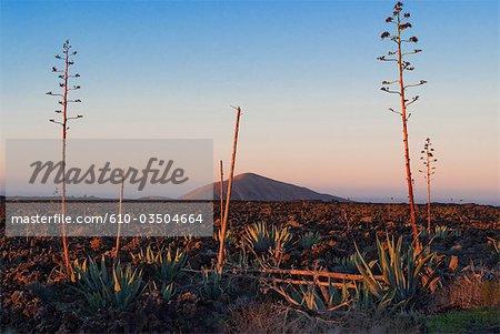 Spanien, Kanarische Inseln, Lanzarote, Nationalpark von Timanfaya