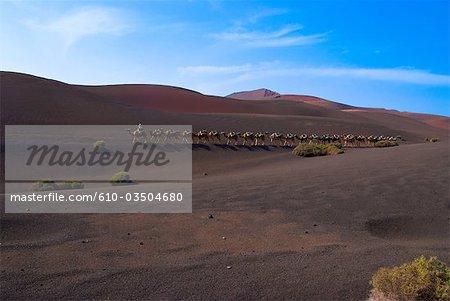 Spanien, Kanarische Inseln, Lanzarote, Nationalpark Timanfaya, Reise am camelback