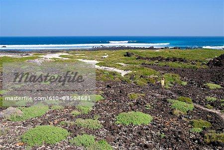 Spanien, Kanarische Inseln, Lanzarote, Caleta del Mojon Blanco