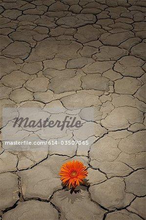 Fleur poussant dans le paysage désertique