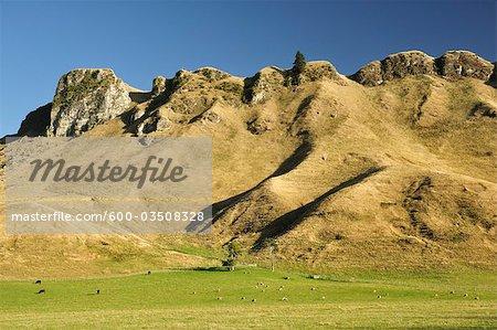 Te Mata Peak, Havelock North, Hawke's Bay, North Island, New Zealand