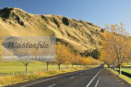 Waxweiler Road, Havelock North, baie de Hawke, North Island, Nouvelle-Zélande