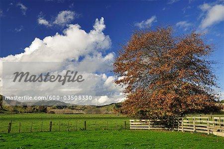 Terres agricoles près de Frasertown, la baie de Hawke, North Island, Nouvelle-Zélande