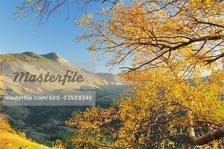 Beech tree, Takaka Hill, Tasman, South Island, New Zealand