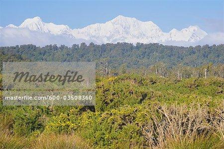 Forestiers indigènes, mont Tasman et Mount Cook, le Parc National de Westland Tai Poutini, côte ouest, île du Sud, Nouvelle-Zélande