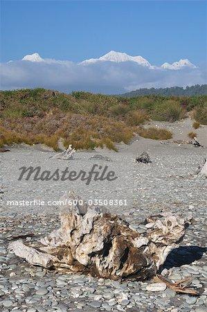 Bois flotté sur Gillespies Beach, mont Tasman et le Mont Cook, le Parc National de Westland Tai Poutini, South Island, Nouvelle-Zélande