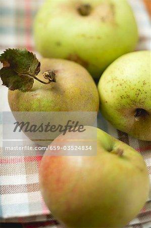 Pommes biologiques diverses sur torchon