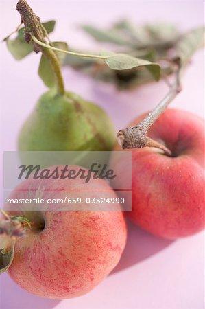 Birne und zwei Äpfel mit Stiele und Blätter (obenliegende Ansicht)