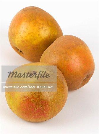 Three apples Russet
