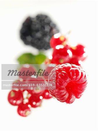 Himbeeren, roten Johannisbeeren/Ribiseln und Blackberry (Nahaufnahme)