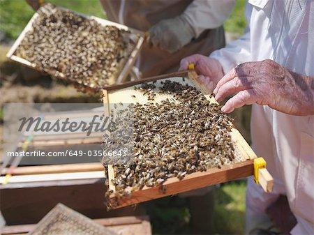 Apiculteurs dont les rayons de miel