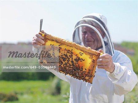 Apiculteur inspecte le peigne de miel