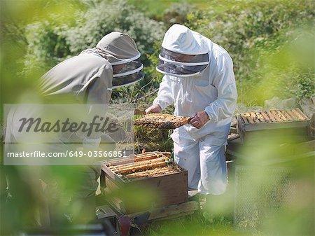 Les apiculteurs inspectent la ruche d'abeilles