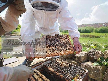 Inspectent les apiculteurs peigne de miel