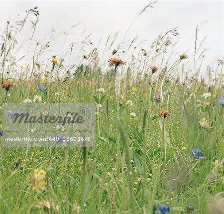 Fleurs de printemps dans la prairie