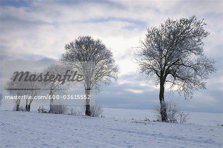 Snow Covered Trees, Heidelstein, Rhon Mountains, Bavaria, Germany