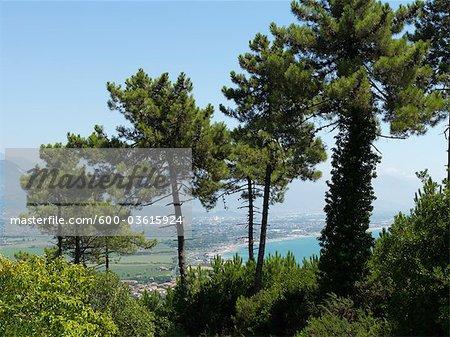 Arbres sur la colline, Italie