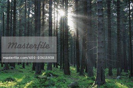 Forest, Achtermann, Harz National Park, Lower Saxony, Germany