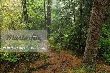 Hiking Trail, St Andreasberg, Harz National Park, Lower Saxony, Germany