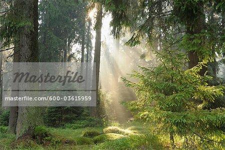 St Andreasberg, Harz National Park, Lower Saxony, Germany