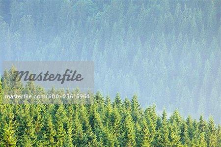 Les forêts, le Parc National du Harz, Harz, Basse-Saxe, Allemagne