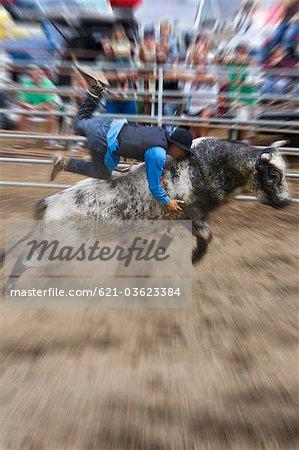 Bull Rider am rodeo