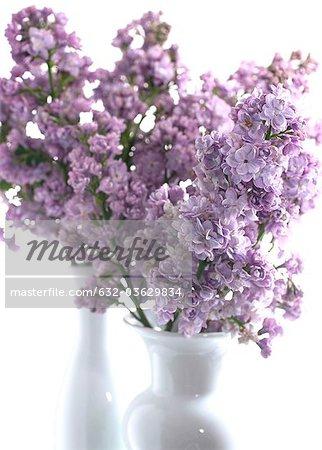 Lilas en vases
