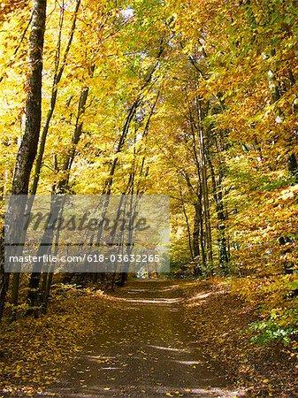 Forest road near Woerthsee, Bayern, Germany, Worthsee