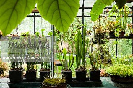 Serres, jardins botaniques, Padoue, Vénétie, Italie