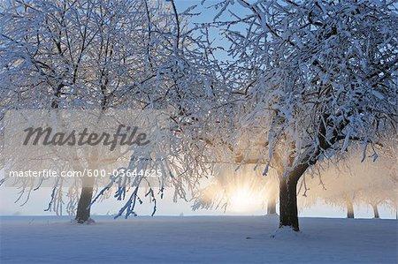 Rayons de soleil dans la neige recouvert d'arbres, Canton de Zoug, en Suisse