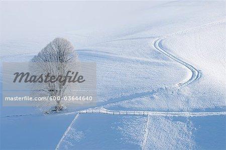 Linde mit Hoar-Frost Reifen Spuren, Kanton Bern, Schweiz