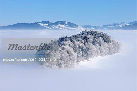 La forêt sur la colline avec la gelée. Canton de Berne, Suisse