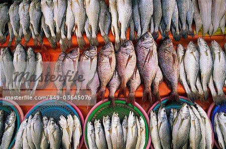 Korea,Busan,Jagalchi Market,Fresh Fish Display