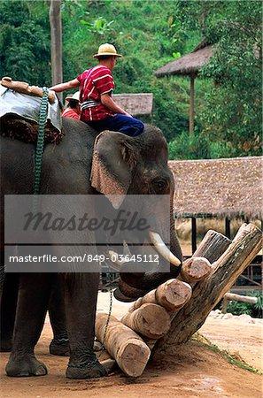 Thailand,Chiang Mai,Mae Sa Elephant Camp,Elephant Show